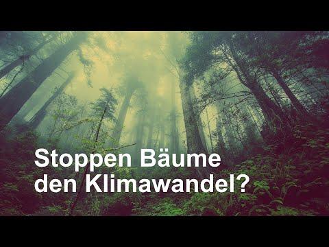 Stoppen Bäume den Klimawandel?