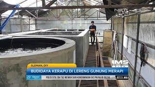 Video Budidaya Ikan Kerapu Di Lereng Gunung Merapi MP3, 3GP, MP4, WEBM, AVI, FLV April 2019