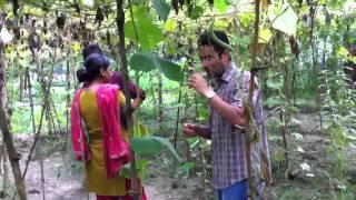Video Bangla garden MP3, 3GP, MP4, WEBM, AVI, FLV Mei 2018