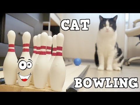 Cat In BOWLING As A Professional !!