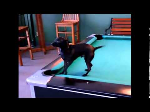 Smart Dogs - Funny Dogs.