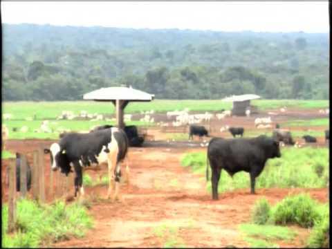 Alternância de culturas traz lucros para produtores de São José do Rio Claro