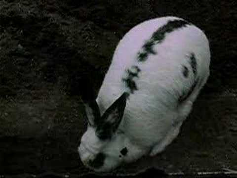 Bunny in Berlin