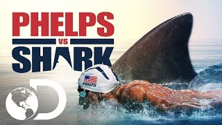 Michael Phelps consegue ser mais rápido que um tubarão branco em alto mar? Esta simulação exibida na Shark Week 2017 mostra que o tubarão leva a melhor - por pouco!