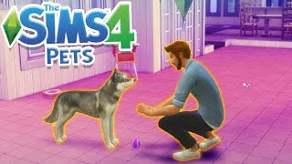 Video DOGGY TRAINING! | Sims 100 Cats& Dogs Challenge #2 MP3, 3GP, MP4, WEBM, AVI, FLV April 2018