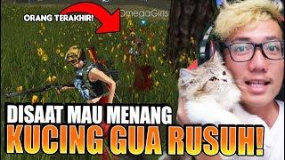 Download Video KUCING GUA RUSUH DISAAT MAU MENANG! jadi menang gak ya?? MP3 3GP MP4