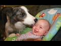 Dogs Meeting Babies For The First Time Compilation 2017 Best Of