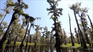 LaPlace (LA) United States  City new picture : Shell Bank Bayou Kayak