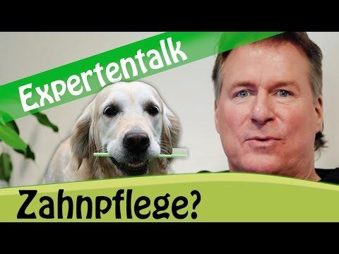 Zahnpflege beim Hund: Muss das sein? Anwendung und Tipps