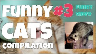 Funny cats compilation #3 by 7 second of happiness FUNNY Video ▶ Thank you for watching this video! If you like it, please, put likes 👍, comments & subscribe to my channel for updates: https://www.youtube.com/channel/UCxSIy_SyK0L8NVVZevNkKew/about?sub_confirmation=1▶ New Best Short Funny Videos all the time: https://www.youtube.com/watch?v=MRtISYYK5uo&index=25&list=PLWUagoeqmhs7r_2QGP9kgn6ZsuFP-mcINWelcome to ★ 7 seconds of happiness ★ best short funny videos channel!!!FOLLOW ME:▶ Google+:  https://plus.google.com/u/1/+Jo7secondsofhappiness▶ Twitter: https://twitter.com/djidjio369▶ Facebook: https://www.facebook.com/7seconds.of.happinessIf you see a clip that you own that you did not submit or give consent for use, we have likely received false permissions and would be happy to resolve this for you! ☆•*•.¸¸. HAPPINESS ☆•*•.¸¸☆•*´¨`*☆•.¸¸.╔╗┼║║┼┼╔══╦═╗╔═╦══╗║║┼╔╣╔╗╠╗║║╔╣║═╣║╚═╝║╚╝║║╚╝║║║═╣╚═══╩══╝╚══╝╚══╝☆ ☜♡☞ Love is everything ☆•*•.¸¸☆•*´¨`*☆•.¸¸.----#7secondsFunnyVideos, #7SecondsOfHappiness, #7secondsVideos, #7secondVideo, #FunnyVideo