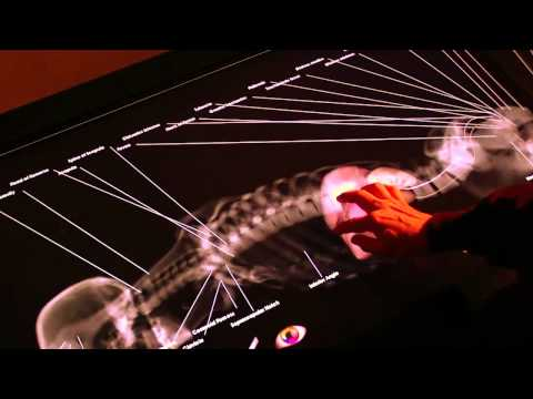 虛擬解剖桌~讓你體驗真正的外科醫生!