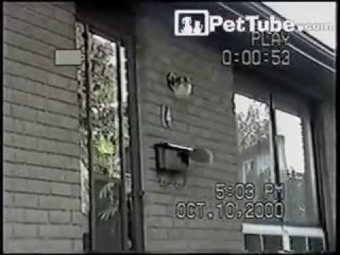 Squirrel Checks the Mail - PetTube.com