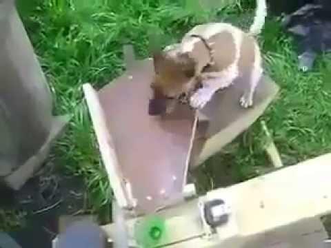 Τι συμβαίνει όταν ένας μηχανικός έχει σκύλο