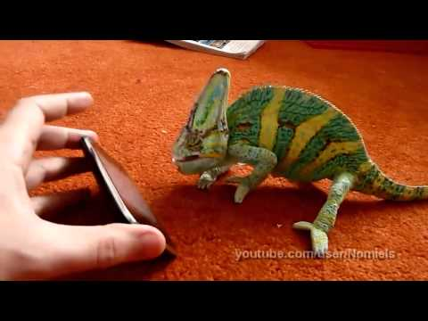 Community Magazine – Chameleon was frightened by iphone (what he saw?)