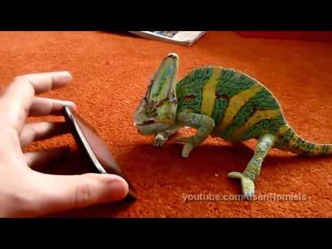 funny video - camaleonte terrorizzato da uno smartphone