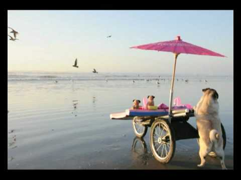Jenny the Pug –  Fun Day at the Beach