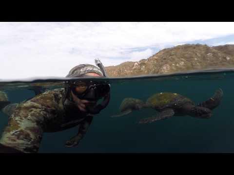Sea Turtles Isla de La Plata Ecuador