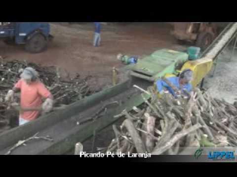 Picador de Madeira Lippel PTL 300 x 600 - Picando Laranjeiras (Madeira Dura)