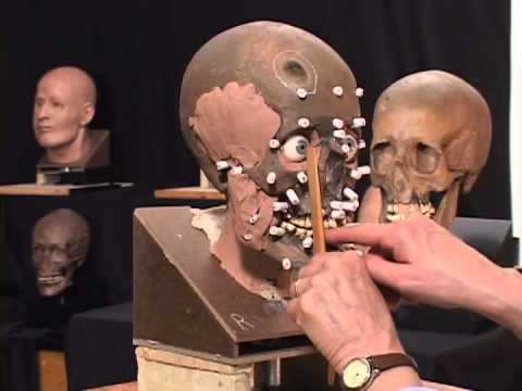 reconstruction - This video demonstrates the process of facial reconstruction completed by Museum Specialist Gay Malin. The video provides a step-by-step description of how a...