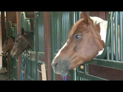 Stanford Horse Lovers