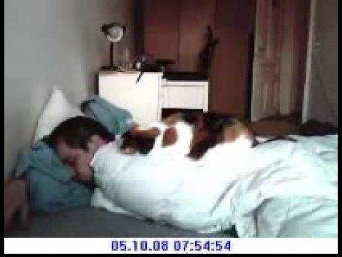 Ночь с котом (видео)