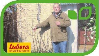 Kübelpflanzen - Fehler beim Überwintern