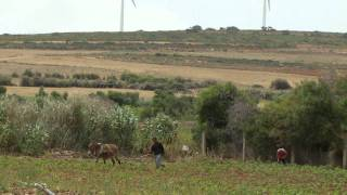http://www.worldbank.org/climatechange - Tunisia is looking at new and cleaner ways of producing energy. It's hoping its first wind...