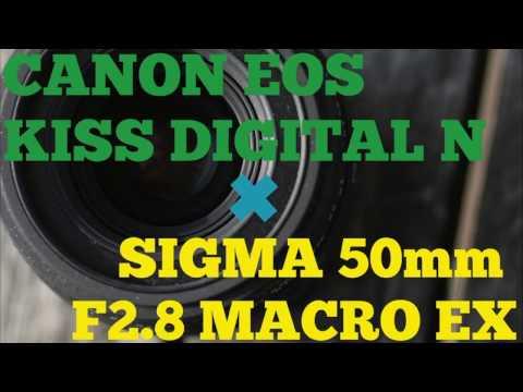 【レンズレビュー】SIGMA 50mm F2.8 MACRO EX ×CANON EOS KISS DIGITAL N【APS-C対応】