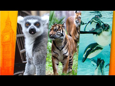 London/Großbritannien: Zoo London (ZSL) - Englands hist ...