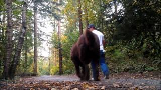 Nonton Titan My Tibetan Mastiff Film Subtitle Indonesia Streaming Movie Download