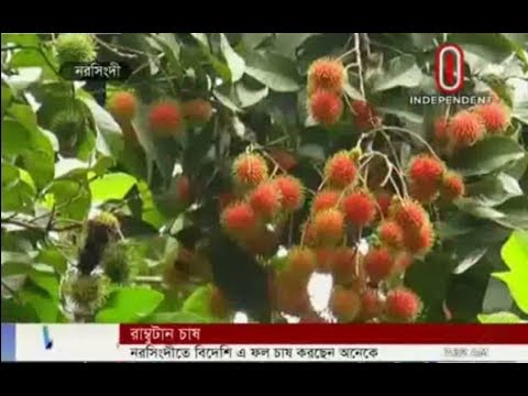 Farmers are growing Foreign Fruit Rambutan (28-07-2017)