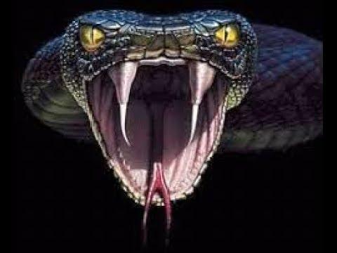 Video Pelicula        - Boa vs Python download in MP3, 3GP, MP4, WEBM, AVI, FLV January 2017