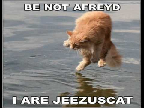 lolcats - Some funny cat pictures... Comment, rate, and subscribe!