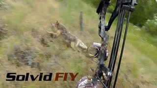 Video Insane Double Archery Coyote Hunting POV Head Cam - Solvid FIY MP3, 3GP, MP4, WEBM, AVI, FLV Juni 2017