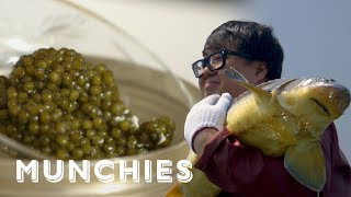 Video The World's Best Caviar, Now Made in China: MUNCHIES Presents MP3, 3GP, MP4, WEBM, AVI, FLV Agustus 2019