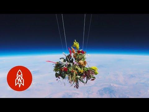 العرب اليوم - شاهد: اليابان ترسل باقة زهور إلى الفضاء الخارجي