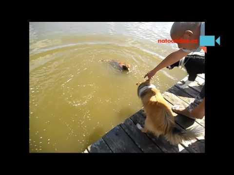 Skoky do vody - Cassidy a Don Gio