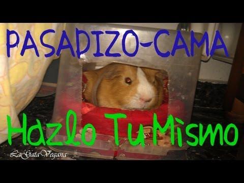 Animales lagomorfos videos videos relacionados con animales lagomorfos - Juguetes caseros para conejos ...