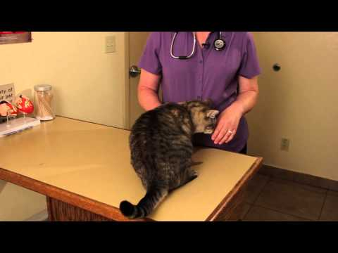 Helping Blind Cats : Cat Health