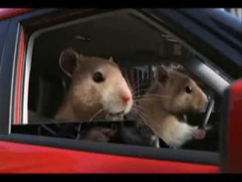 Kia Soul Hamster. Kia Soul (Hamster) Commercial