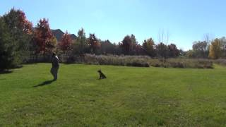 Training a dog off leash in Madison Wisconsin
