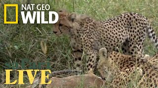 Safari Live - Day 164 | Nat Geo Wild by Nat Geo WILD