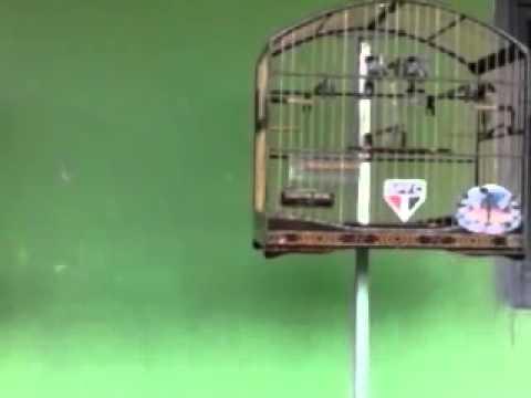 treino em casa super-chock jucuruçu-BA