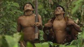 Nonton Amazon Jungle Amazon Hutan Berburu Dengan Cara Alami Film Subtitle Indonesia Streaming Movie Download