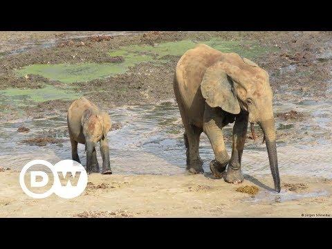 Schutz für Wildtiere in bewaffneten Konflikten | DW D ...