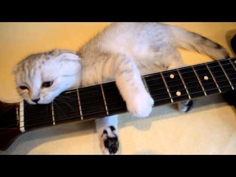 Кот гитарист