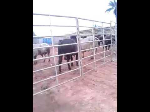 Rodeio em itacambira(MG)