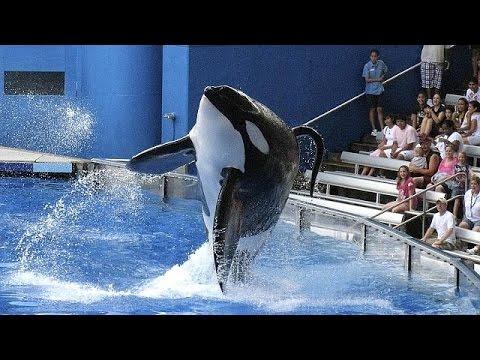 HΠΑ: Τερματίζει τις παραστάσεις με όρκες η Sea World