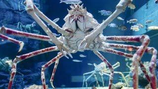 Video Top 10 Scariest Giant Creatures MP3, 3GP, MP4, WEBM, AVI, FLV Oktober 2017