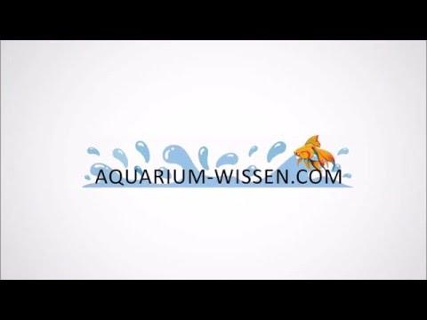 08 Einbringen von Wurzeln in ein Aquarium